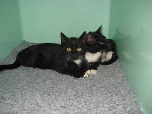 Two feral kittens rescued and given a loving home