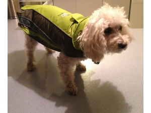 Thank goodness Mum brought me this warm jacket from Balmoral Vets - or I would have to walk and freeze in the snow!